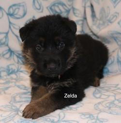 ZeldaFeb1.jpg