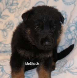 MeShachFeb1.jpg