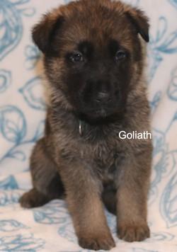 GoliathFeb1.jpg
