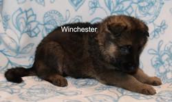 WinchesterFeb1.jpg
