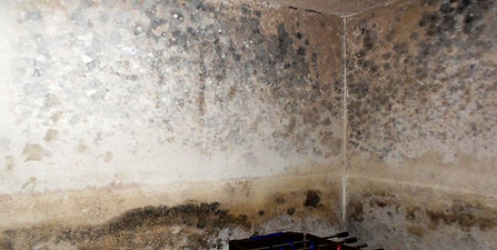 Mold and Air Quality Testing