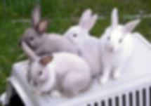 konijnenhotel
