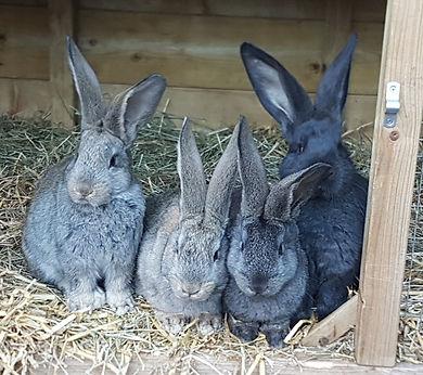 konijnenkennis.jpg