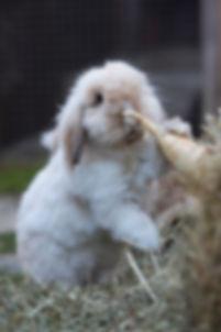 konijn en voeding.jpg