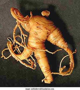 goldenseal root.jpg