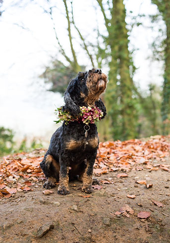Flowers for pets.jpg