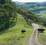 02_DSC_4722_Paicines Ranch-LOW RES.jpg