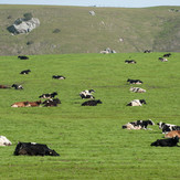 01_DSC_2727_Tresch Ranch-LOW RES.jpg
