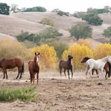 08_DSC_3843_Rancho San Carlos-LOW RES.jp