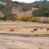 14_DSC_4081_Rancho San Carlos-Extra-LOW