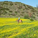 01_DSC_9512_McCrea Ranch-LOW RES.jpg