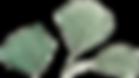 Singular Leaf.png