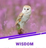 WISDOM - the last theme of Virtues for 2020