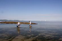 oesters-zoeken-plukken-rapen-zeeland.jpg