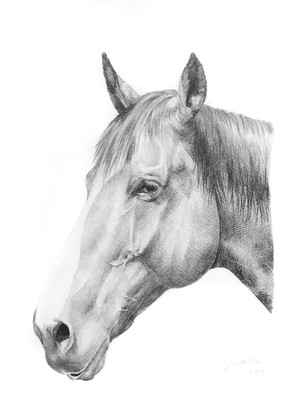 French Thoroughbred