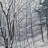 꽃샘추위(Spring colds)    60.6X72.7cm      o
