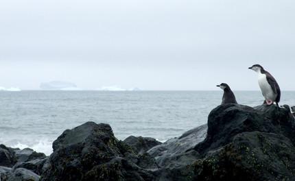 Marine invaders storm across Antarctica's 'moat', the Antarctic Polar Front