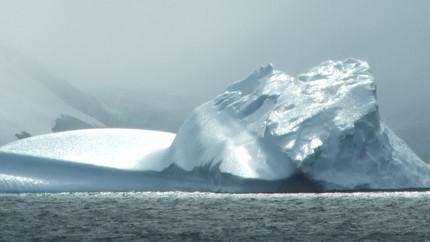Top-up PhD scholarship available - Antarctic marine biology