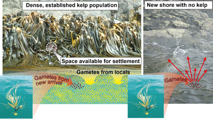 The race for new space! How disturbance and dispersal affect spatial patterns of biodiversity.