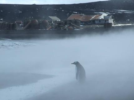 Field trip to Deception Island, Antarctica