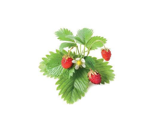 WILD STRAWBERRY REFILL(野生草莓-種子匣)