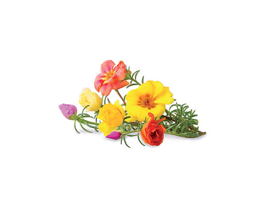 MOSS ROSE REFILL(苔蘚玫瑰-種子匣)