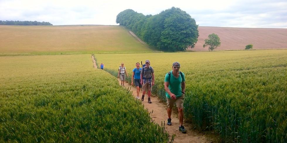 Social Hike - North Downs and Boxhill