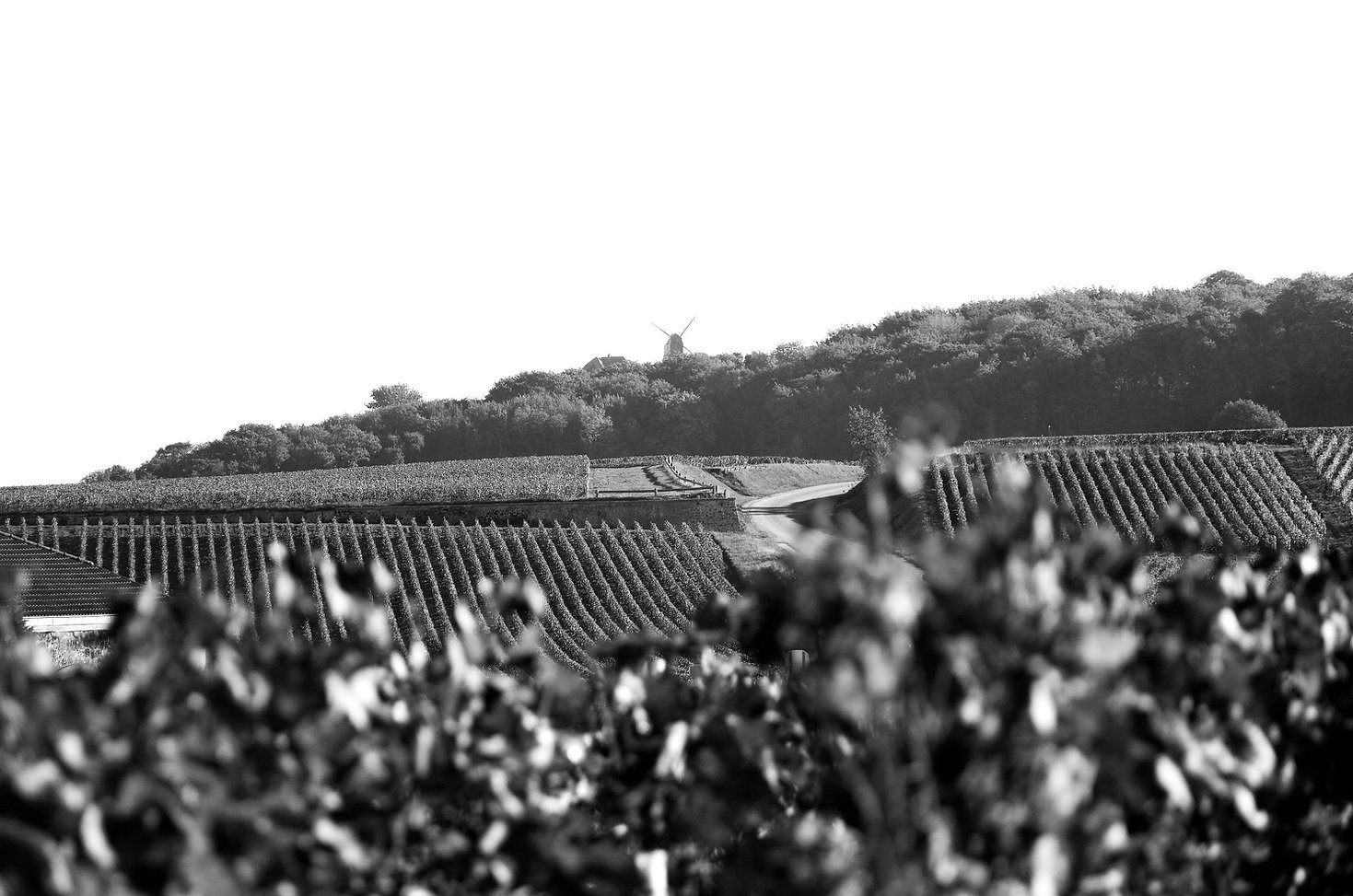 Photo | Notre exploitation | France | Champagne Lucien Roguet Grand Cru