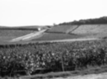 Photo Vignoble | France | Champagne Lucien Roguet Grand Cr