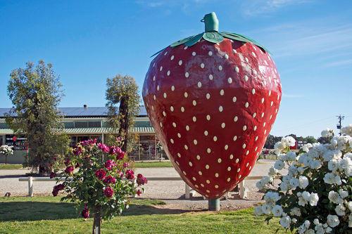 The Big Strawberry.jpg