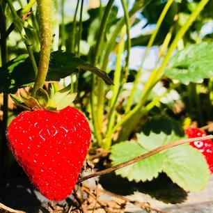 strawberry.jpeg