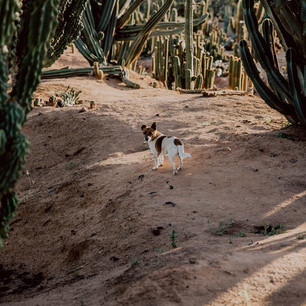 cactusdog.jpg