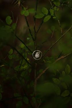 Wedding rings in a tree