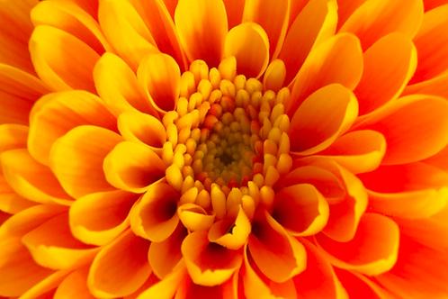 The Orange Carnelian Healing Ray - Mental Clarity & Physical Healing