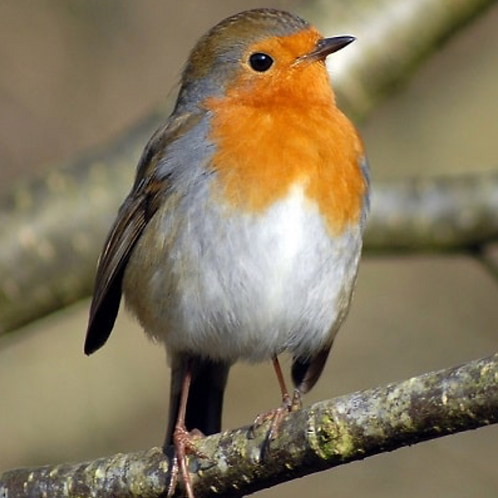 The Robin Empowerment - Sing forth your Personal Song