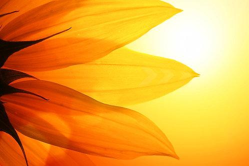 Sunflower Reiki - Spiritual Balance, Stability and Psychic Protection