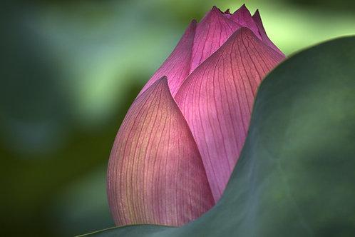 Lotus Energy LightWork Reiki - Wisdom,Harmony, Compassion & Purity