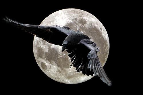 Raven Runelore Shamanic Healing System - Raven Magic & Runic Healing