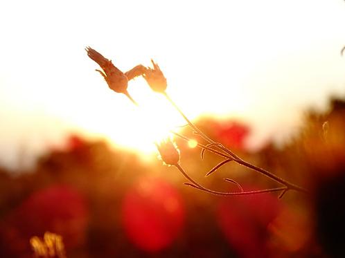 Living Light Healing Empowerment - Bare Basic Healing & Spiritual Growth