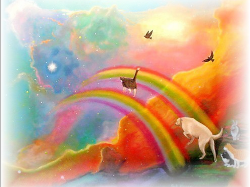 Pet Bereavement Reiki - Dissolve Grief, Loss and Sadness