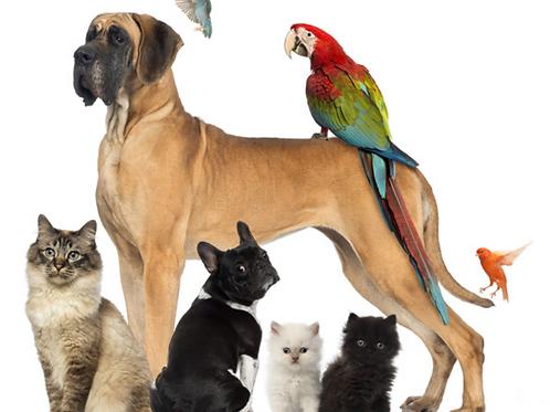 The Spiritual Animal Healer Program - Animal Communication & Healing