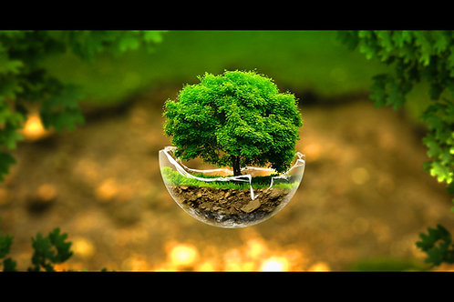 Tree of Life Reiki Empowerment - Intensive Spiritual Grounding