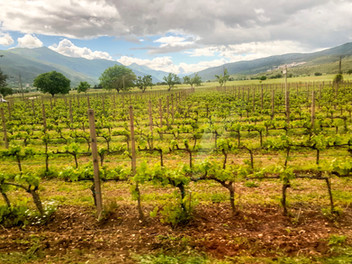 The Perspectives of Women Winemakers in Abruzzo