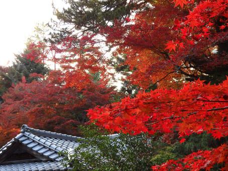 Las hojas rojas de otoño