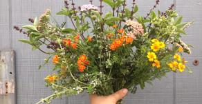 Edible Flowers: Hidden Farm Gems