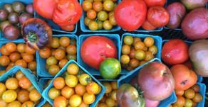 Tomato Basics:Heirlooms vs Hybrids