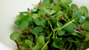 The Biggest Little Veggie You're Missing: Microgreens!!!