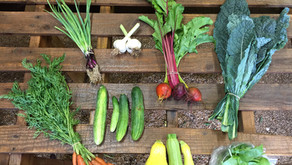 How to Get the Most Out of Your Spring CSA Shares
