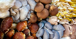Culinary Mushrooms 101: A Guide to Our Current & Upcoming Offerings