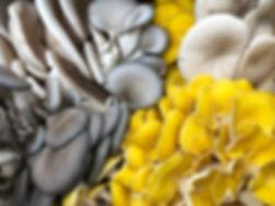 oyster mix.jpg